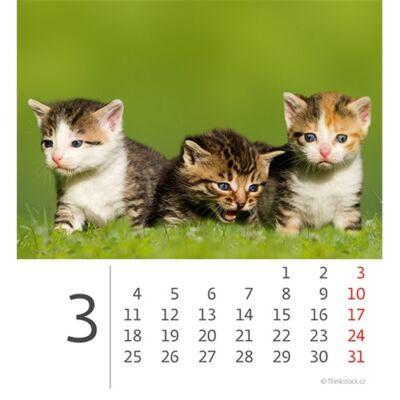 Asztali naptár képes Dayliner mini fehér lapos Cicák 2019.
