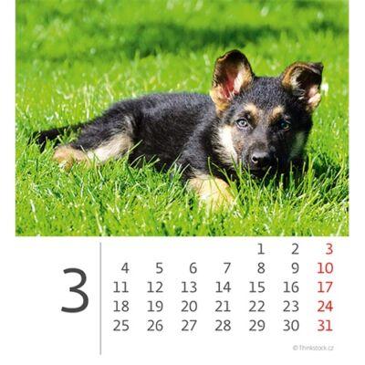 Asztali naptár képes Dayliner mini fehér lapos Kutyák 2019.